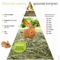 voedingspyramide konijn