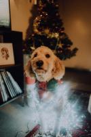 Gewijzigde openingsuren tijdens de feestdagen!