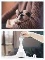 Aromatherapie bij dieren