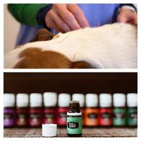 Alles weten over aromatherapie en acupunctuur?