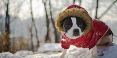 Hoe koud is te koud voor uw hond?