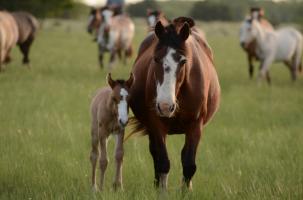 Rhinopneumonie en EHV bij paarden